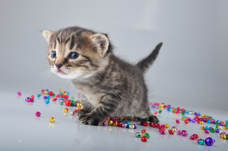 Little kitten with small metal jingle bells beads . Studio shot. photo