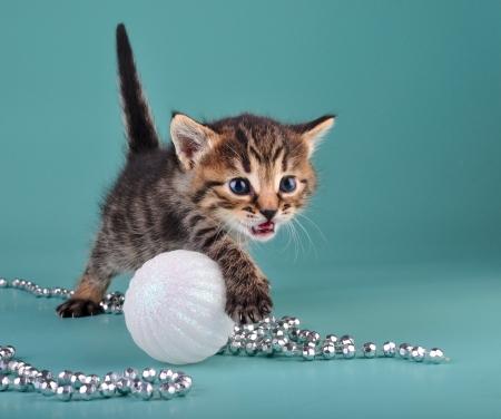 mewing: Small  kitten among Christmas stuff .