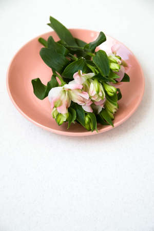 A sprig of flowers lying on a pink plate on a white background