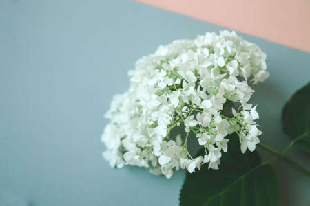 Jasmine flower on the table, colors details