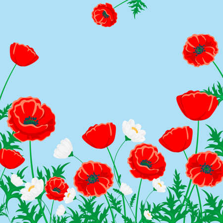 Red poppy and white chamomile illustration.