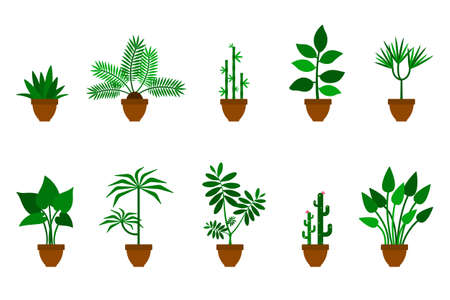 Home, office flowers vector icon illustration set. Green plants in brown clay pots flat style design collection on white background