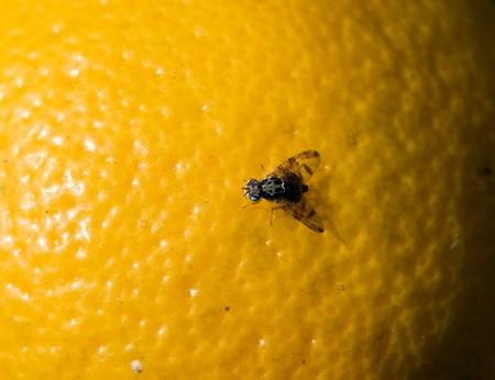 veiny: volar en una sesi�n de naranja Foto de archivo