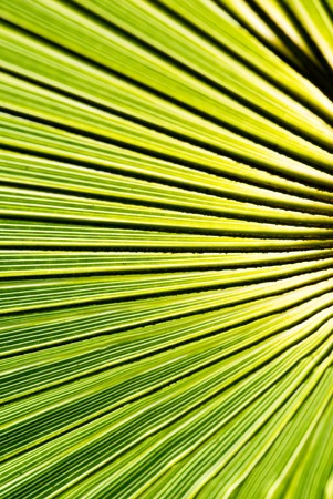 closeup of green palm leaf photo