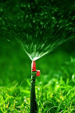 lawn sprinkler: Water sprinkler showering grass