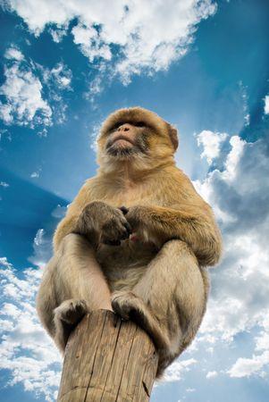 monkey sitting on the wooden column
