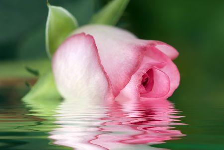 rosebud in selective focus photo