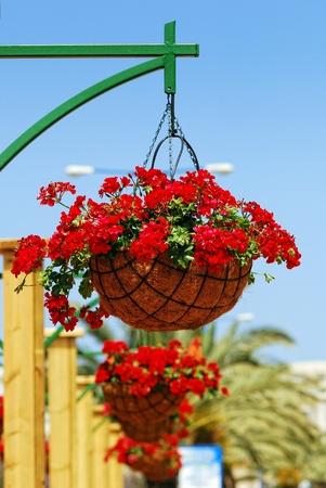 hanging basket: Flower basket on a post