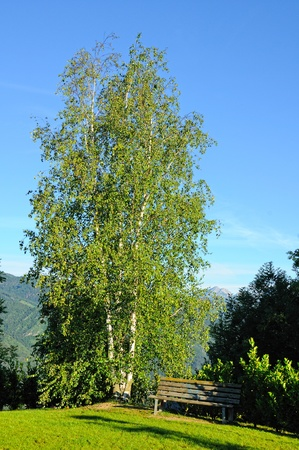beautiful view of birch and bench over blue sky Stock Photo - 10474939