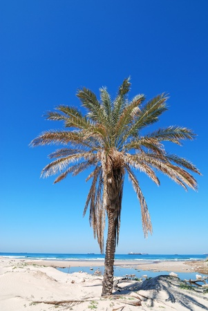 palm tree on the beach photo
