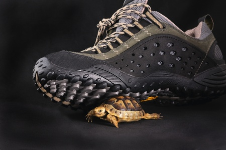 sport shoe and turtle over black photo
