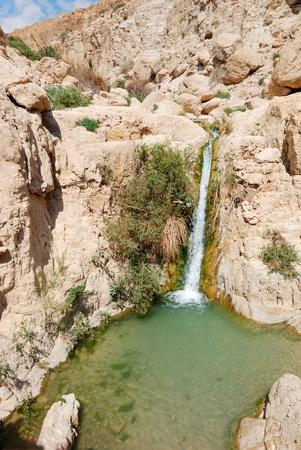 ein: national park Ein Gedi, Israel