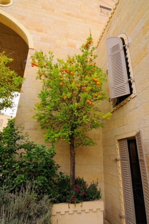 typical jerusalem house, yard with flowers and mandarin tree photo