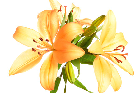 orange lily isolated on white background photo