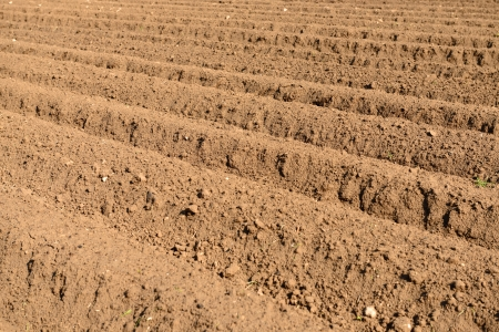 arable land: view of some fresh arable land Stock Photo