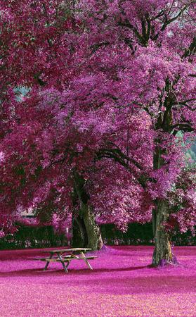 alberi da frutto: Un banco di legno sotto gli alberi da frutto