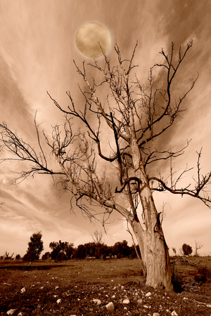 Dusk landscape in sepia tones - silhouettes of the bare tree branches on the background of the full moon. Stock Photo