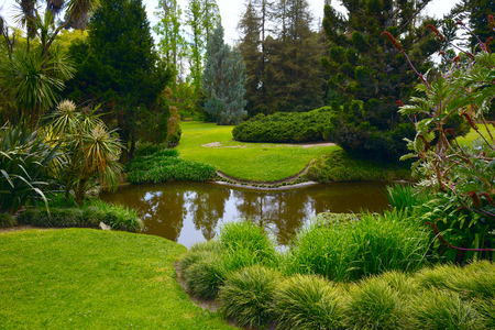 pasadena: View of palm trees and dense tropical vegetation growing around small pond. Huntington Library Park. Pasadena, USA. Stock Photo