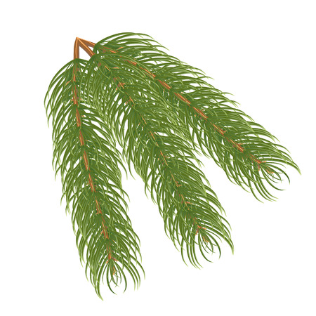 Pine branch.Vector illustration tree needle object pine