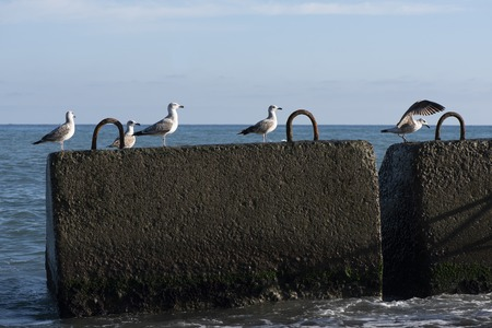 sea with two wet concrete blocks in the foreground. on the five blocks of seagulls