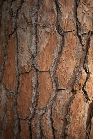background photo with a dry brown crust. the bark of the tree is dry, with a vertical pattern.the veins between the individual elements are darker