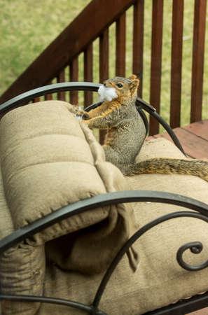 mischievous: Mischievous Squirrel