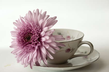 Pink Daisy resting in delicate cup