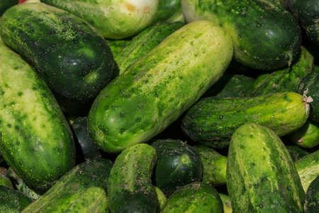 cucumbers: Garden Fresh Cucumbers Stock Photo