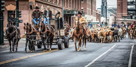 steers: National Western Stock Show Parade