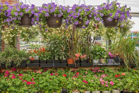 Garden Store