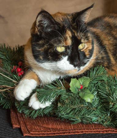 Holiday Kitty Reklamní fotografie