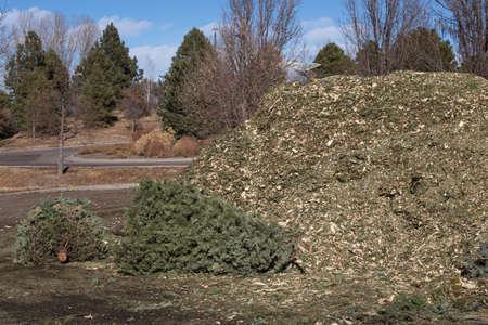 dropoff: Recycling trees Stock Photo