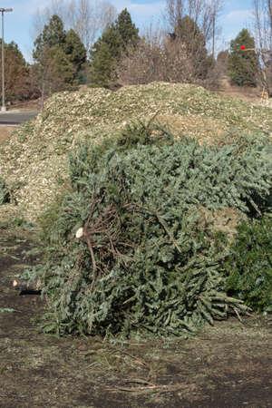 dropoff: Christmas Tree Recycling Stock Photo