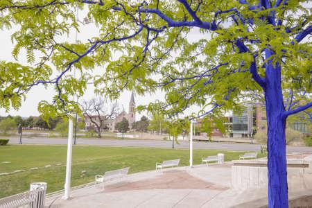 Blue Trees in Denver