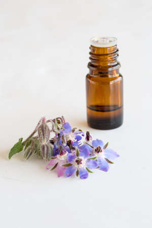 Essential oil with Borage flowers