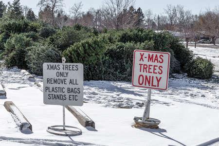 Christmas trees recyling site Reklamní fotografie