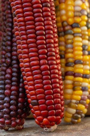 Colored Corn Reklamní fotografie
