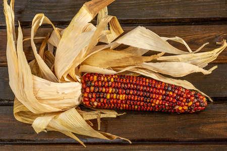 Colored Indian Corn Reklamní fotografie