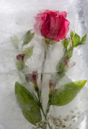 Red rose frozen in ice Reklamní fotografie