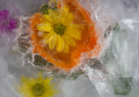 Flowerss and orange pepper frozen in ice