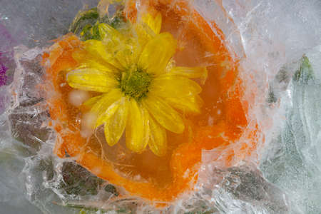 Frozen flower and vegetable