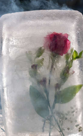 Red rose , ice, and smoke