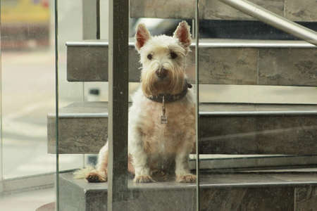 Cute little puppy photographed behind window  photo