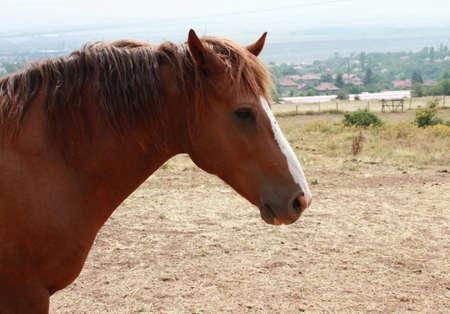 muck: Closeup picture of a horse head