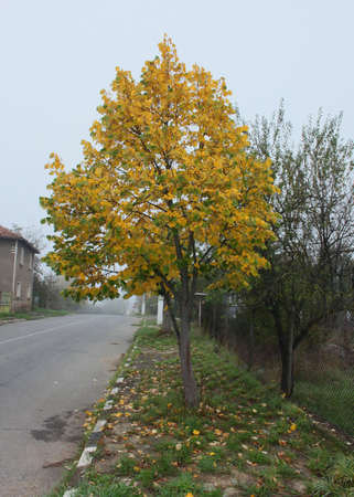 Autumn tree and empty rural road photo