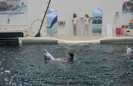 public aquarium: Playful dolphins in Festa Dolphinarium  Varna Bulgaria