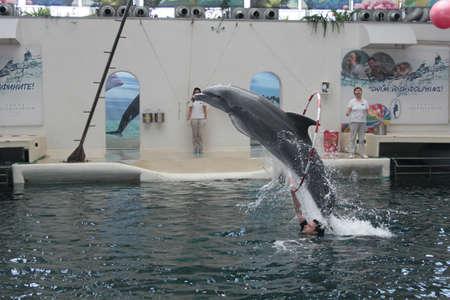 dolphinarium: Playful dolphins in Festa Dolphinarium  Varna Bulgaria