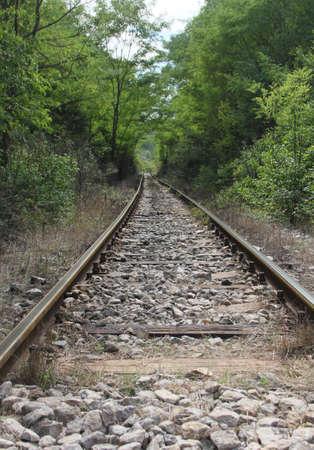 wood railway: Perspective railway tracks in the wood