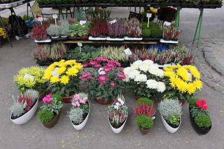 Flower market in the street Stock Photo