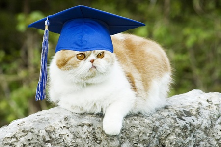 Cat posing on rock with graduation hat with tassel, funny  copy space photo